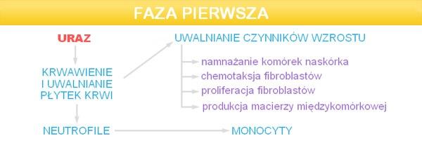 dermapen_faza_1